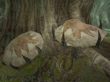 Грибное дерево Деменция