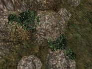 Зелёный лишайник (растение) 01