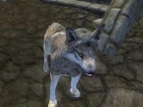 Hjalti (Dog)