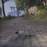 Остроухая кошка