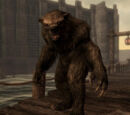 Медведь-оборотень