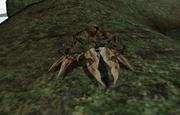 Granchio Morrowind