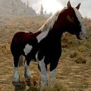 Horse (Skyrim)