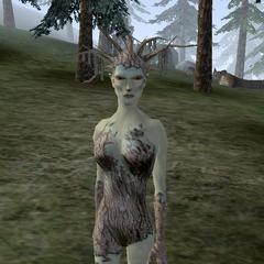 Wiła z gry The Elder Scrols III: Przepowiednia