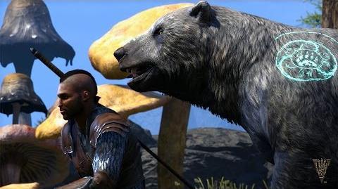 The Elder Scrolls Online Morrowind – игра за Warden