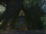 Traders Tree