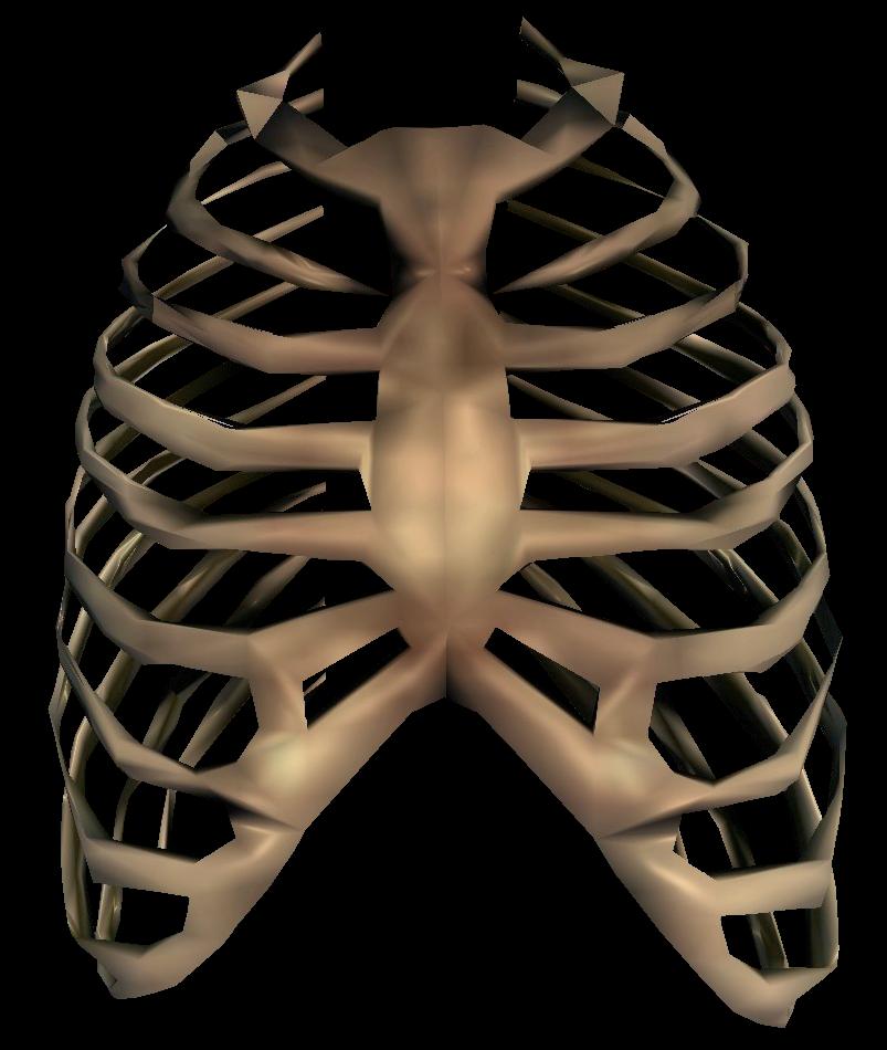 Bone Oblivion Elder Scrolls Fandom Powered By Wikia