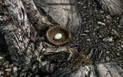 Skyrim brids nest