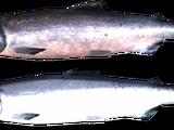 Łosoś (Skyrim)