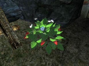 Земляника (растение)