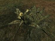 Креш-трава (TES III) 02