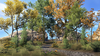 Trees of Tamriel Garden Pack