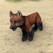 Рыжий ямный волчонок