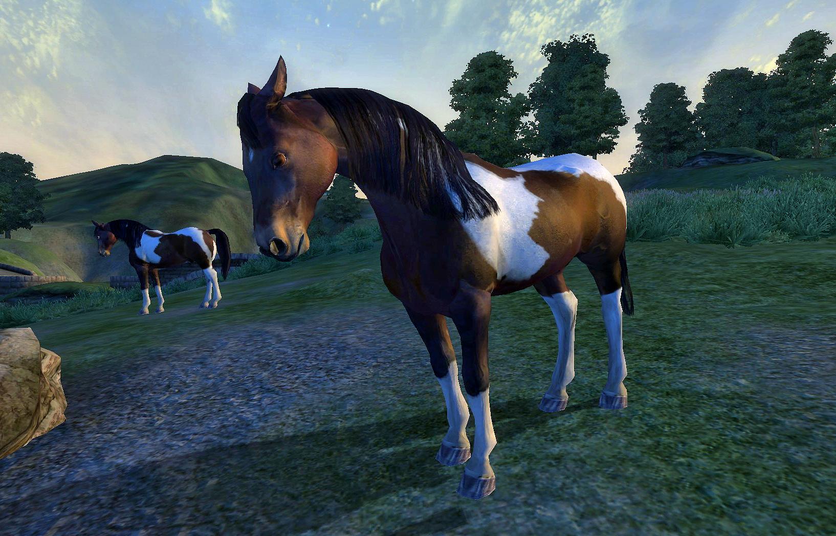 Wild Paint Horse   Elder Scrolls   FANDOM powered by Wikia