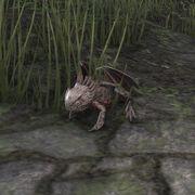 Огнедышащая лягушка-дракон