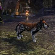 Волчонок из Хелкарна