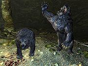Квест 10 медвежьих шкур