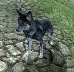 Собака(Обливион)