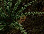 Толстоспорник (растение) 02