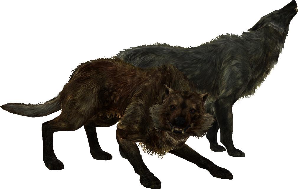 Wolf (Skyrim) | Elder Scrolls | FANDOM powered by Wikia