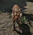 Alpha Wolf Skyrim.png