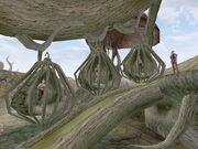 Targ niewolników (Morrowind)