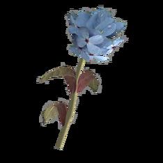 Голубой горноцвет