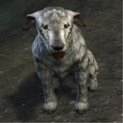 Barbas w postaci psa z gry The Elder Scrolls Online
