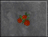 Red Berries (Daggerfall)