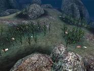Моллюски-жемчужницы (Morrowind) 02