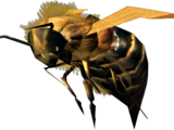 Pszczoła (Skyrim)