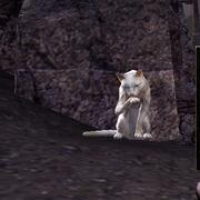 Белая кошка миледи