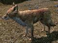 Fox Skyrim.png