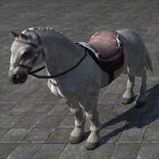 Imperial Horse Имперская лошадь