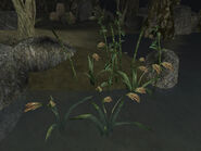 Прибрежная флора (TES III) 04