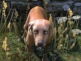 Dog (Online)