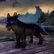 Волчонок из Вечнотени