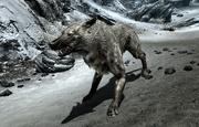 Ice Wolf (Skyrim)