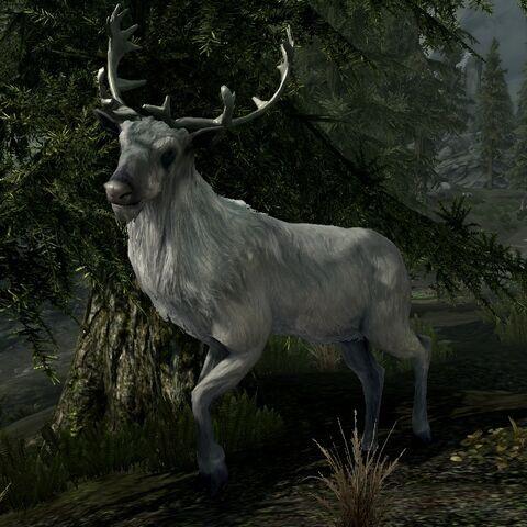 Biały Jeleń z gry The Elder Scrolls V: Skyrim