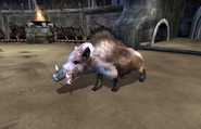 Porkchop the Boar