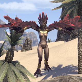 Harpia z pustyni Alik'r z gry The Elder Scrolls Online