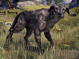 Windhelm Wolfhound