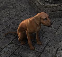 Лорхан (собака)