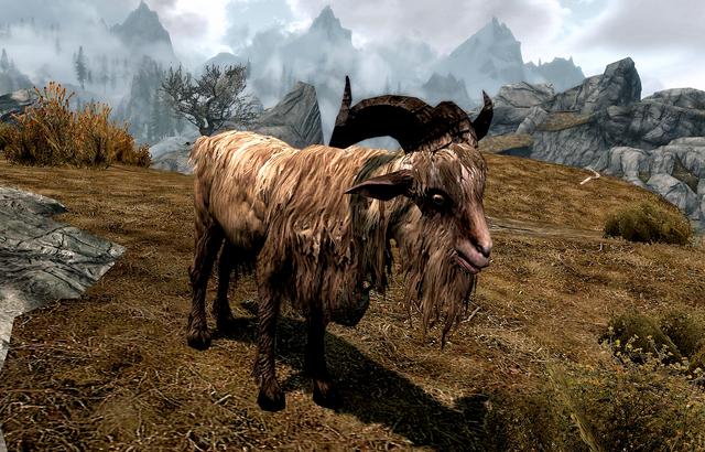 File:Gleda the Goat.png