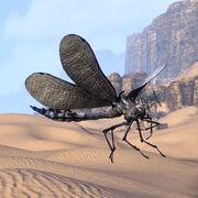 Королевская дова-муха