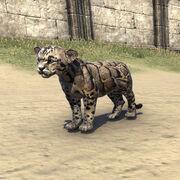 Детёныш дымчатого леопарда