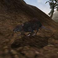 Крыса (Morrowind)
