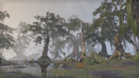 Шедоуфен (Online) — Заболоченный лес