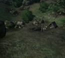 Black Dog Camp