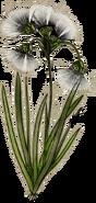 Tundracotton